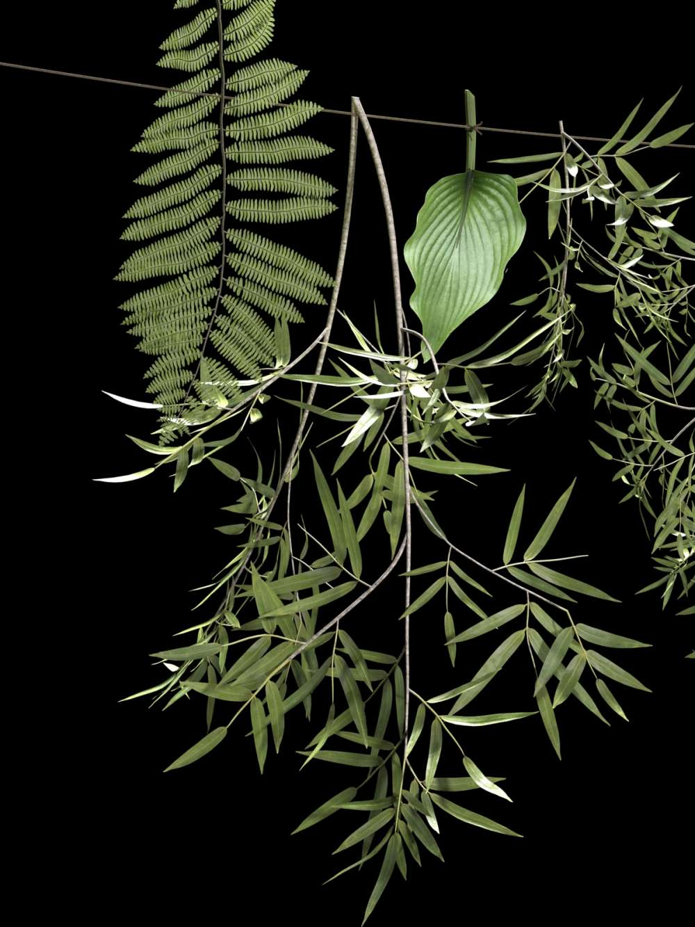Hanging Plants on Rope 3d model
