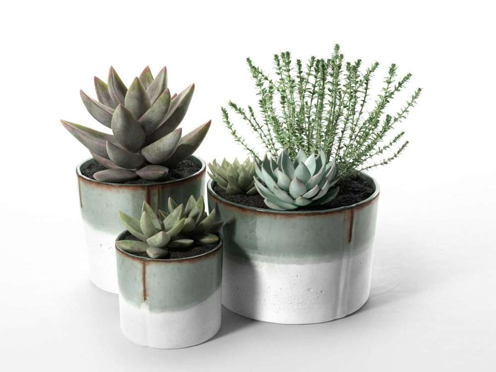 Succulent Pot Set with Echeveria and Rosemary Plants 3d model