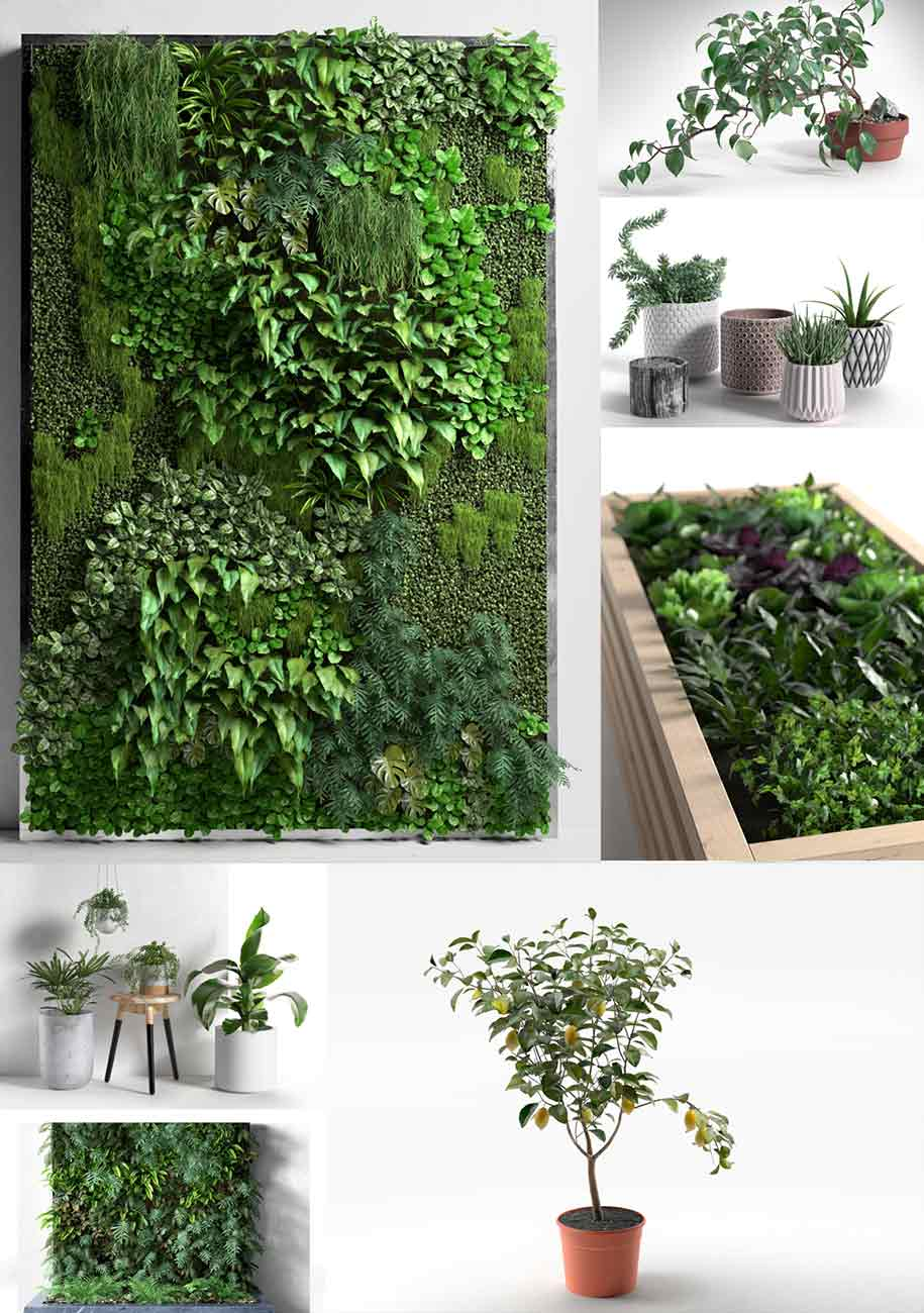 Plants collection 2 3d model