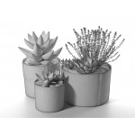 Succulent Pot Set with Echeveria and Rosemary Plants