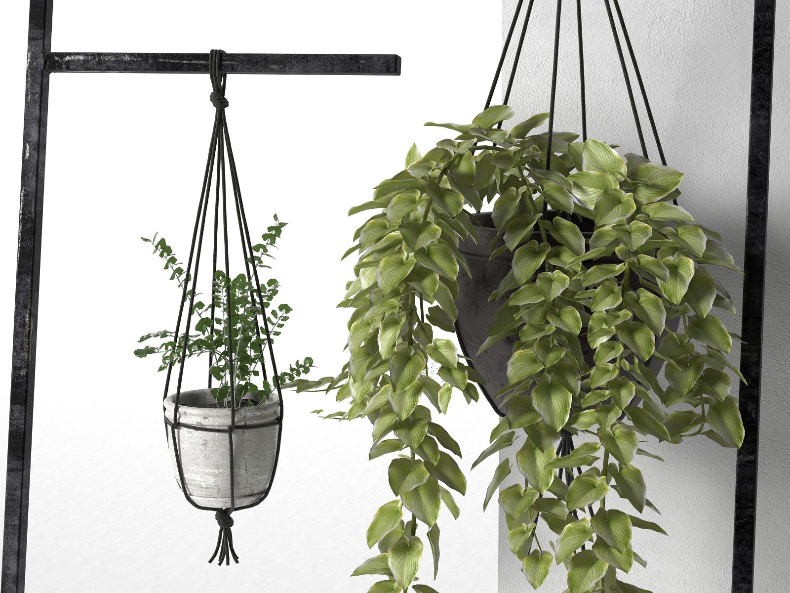 Leaning Display Ladder With Hanging Plants